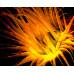 Фонарь Light & Motion Sola Nightsea